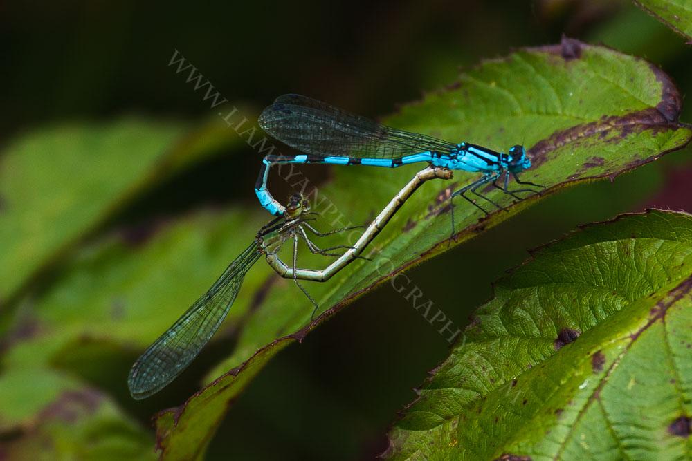 dragonfly9292.jpg