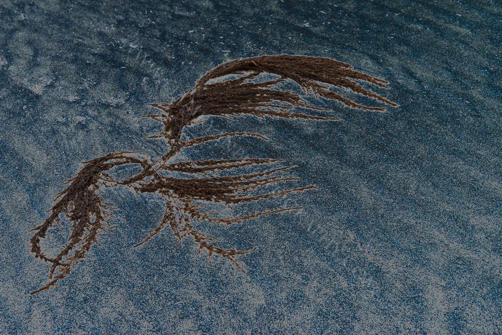 seaweed7346.jpg