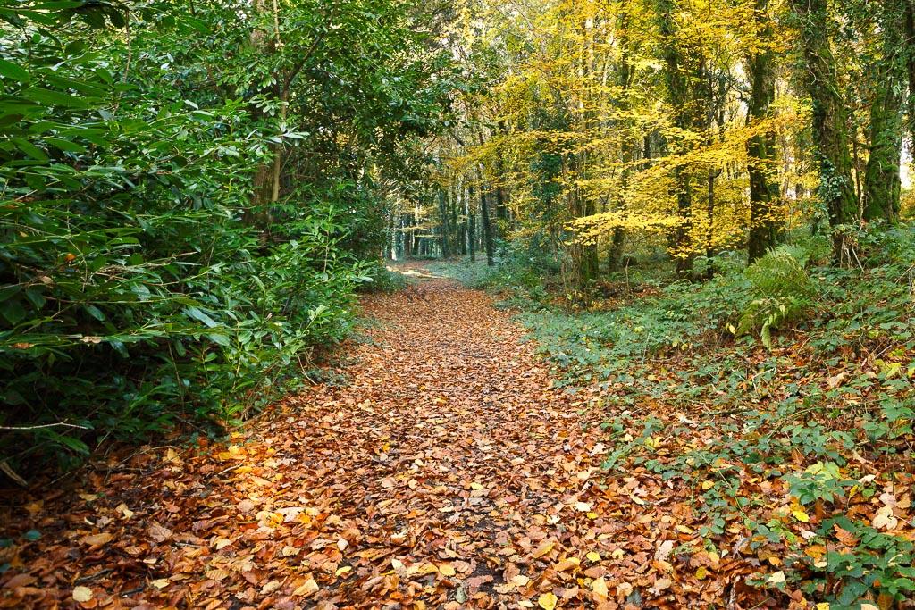 woods12111010.jpg