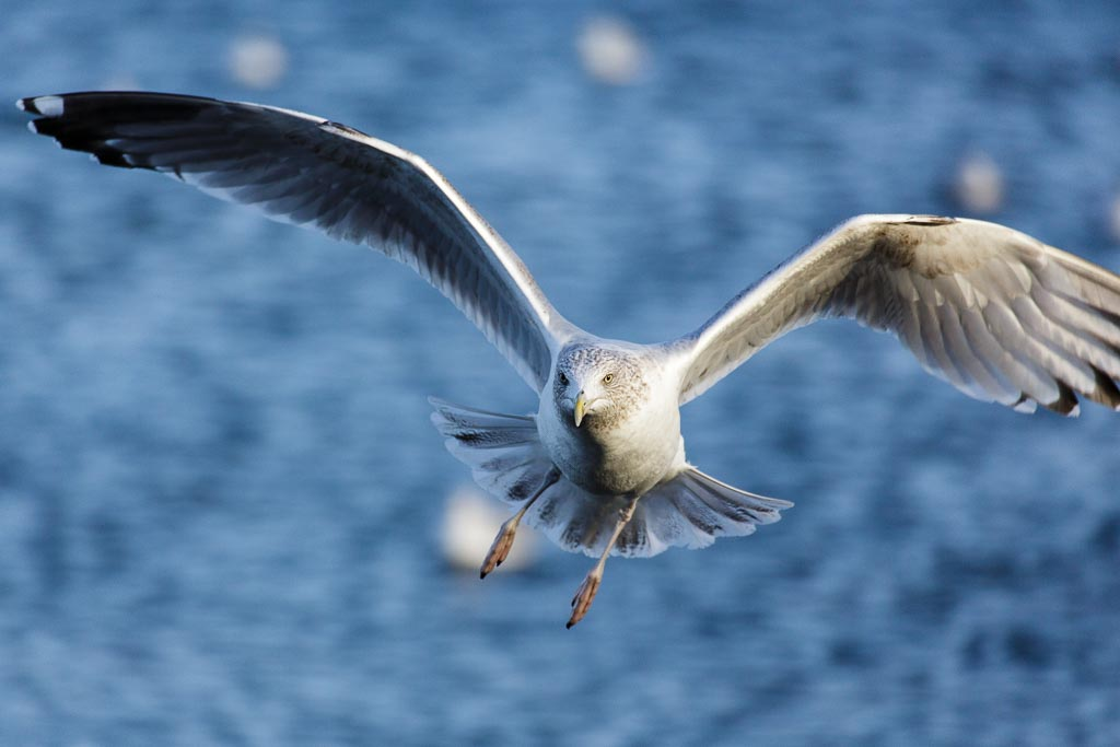 seagull10.jpg